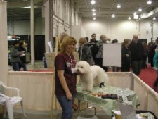 All About Pet Show 2008 – Rescue Rodeo